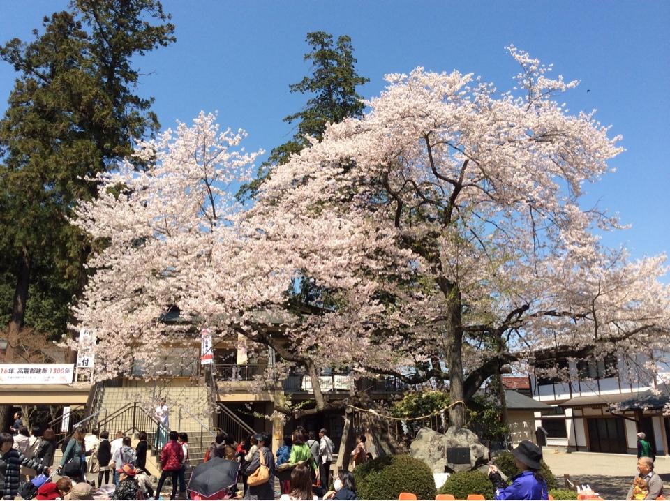 桜の森の満開の下、浪漫に出会いました~高麗神社に初めて行った時の記録~